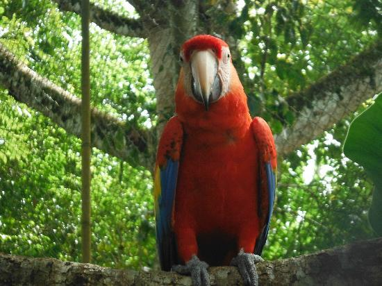 Jose Tours Belize: Macaw at the zoo
