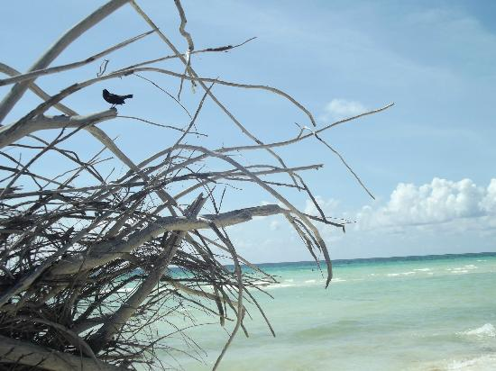 Gold Rock Beach  |   Lucayan National Park, Grand Bahama Island