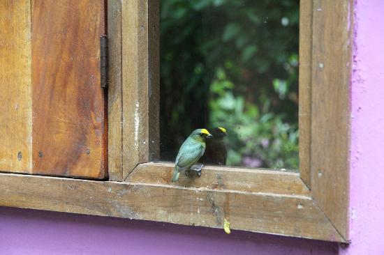Cabinas Lunatica: La mia finestra