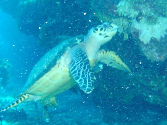 Big Island Watersports Trip Advisor