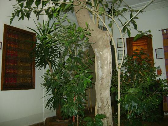 Riad Coram: Courtyard