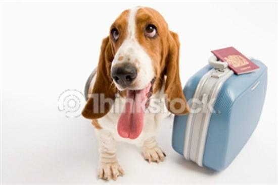 Days Inn Missoula Airport : Pet Friendly Days Inn