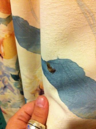 BB Hotel: Ekelhafte Ausscheidungen am Vorhang