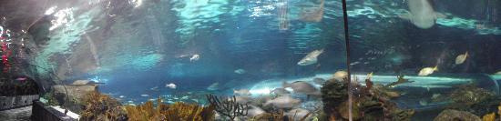 Ripley's Aquarium of the Smokies: Shark tank