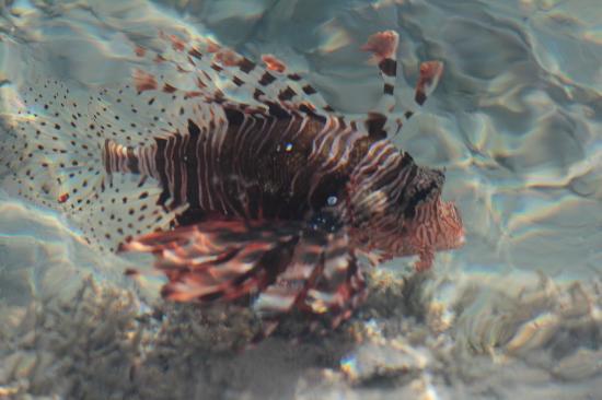 Blue Reef Red Sea Resort : *