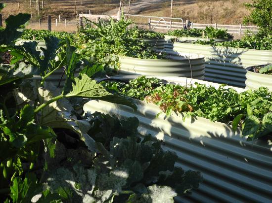 Restaurant Botanica : Botanica's vegetable garden