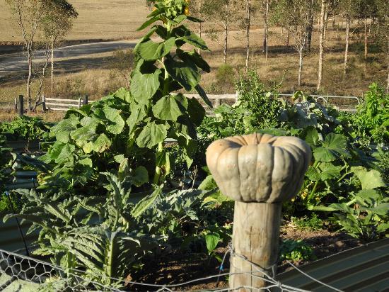 Restaurant Botanica: Botanica's vegetable garden