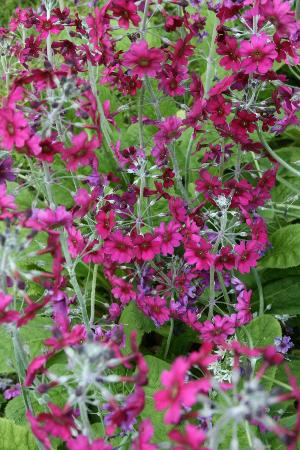 Simply Nice Tours: Bodnant Gardens