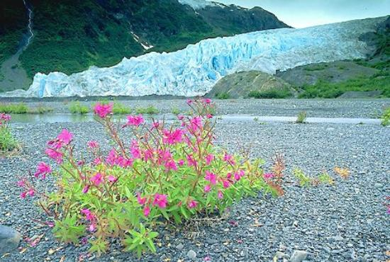 Kim's Forest Bed and Breakfast : Exit Glacier