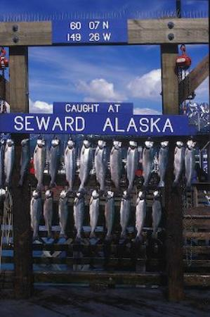Kim's Forest Bed and Breakfast : Finest fishing in Alaska