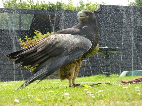 Yarak Bird of Prey 사진