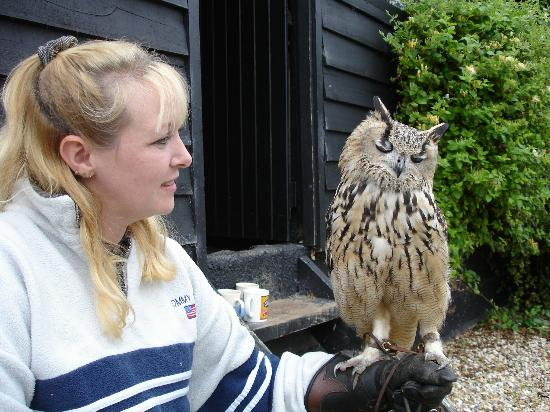 ‪‪Yaraks Birds Of Prey Falconry Centre‬: Me Wife with one of the bigger Owls
