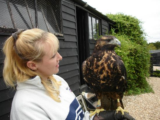 Yaraks Birds Of Prey Falconry Centre: My Better half in 2007
