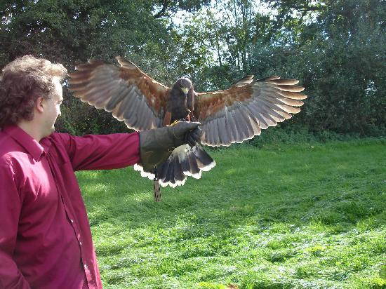 Yaraks Birds Of Prey Falconry Centre: Thats me with Harris Hawk in 2007