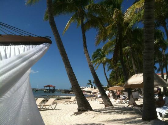 Casa Marina, A Waldorf Astoria Resort: Gorgeous property - view of ocean, beach from our hammock!