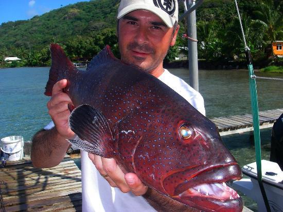Bora Bora Fishing Paradise Lodge : mérou a point bleu