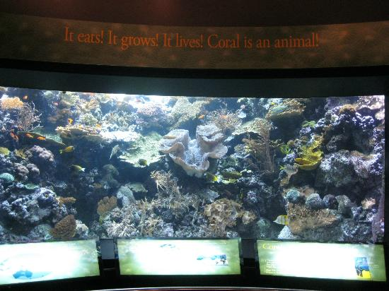 fish picture of shedd aquarium chicago tripadvisor