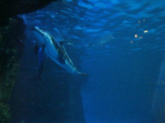 Turtle Picture Of Shedd Aquarium Chicago Tripadvisor