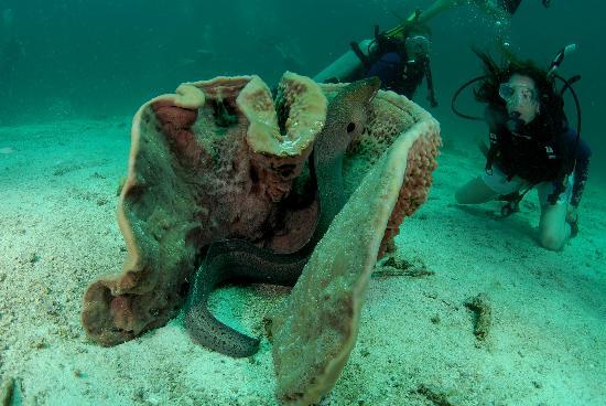Go Dive Lanta: eel