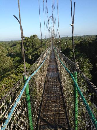 Sacha Lodge: canopy walk