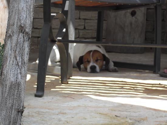 Falko Beach Bar: No dogs in purses here