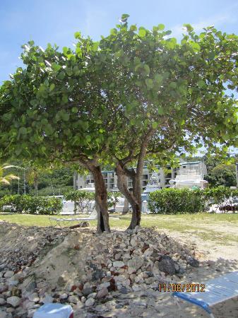 Sapphire Beach Resort: Beach Area