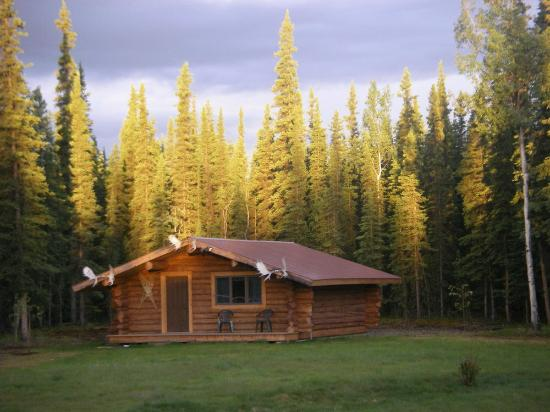 Cloudberry Cabin B&B: Cabin and lawn