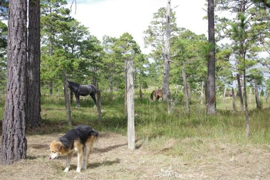 Caserio Valuz : The horses