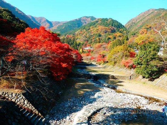 Yoro-cho, Japan: 橋の上から