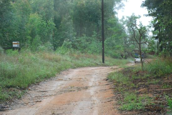 Driveway to Numbela