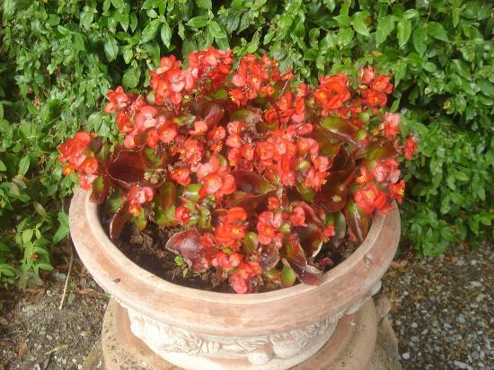 Vignamaggio: Floral