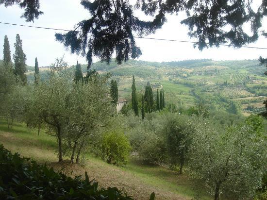Vignamaggio: Scenic View