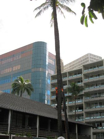 Breakers Hotel: Palm trees are trimmed every 3-4 months by a tree service company