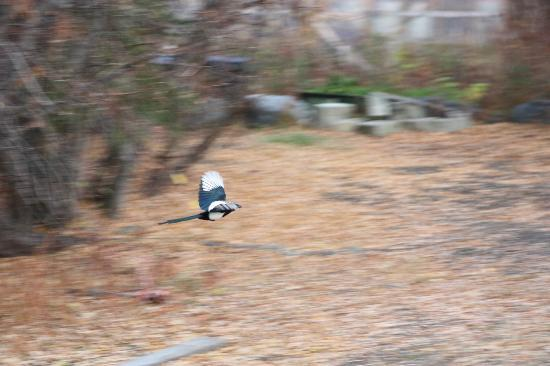 Inn On The Lake: Magpie flyby