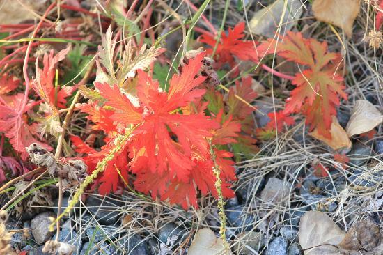Inn On The Lake: Fall colors everywhere