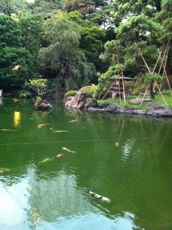 Grand Prince Hotel Takanawa: Koi pond