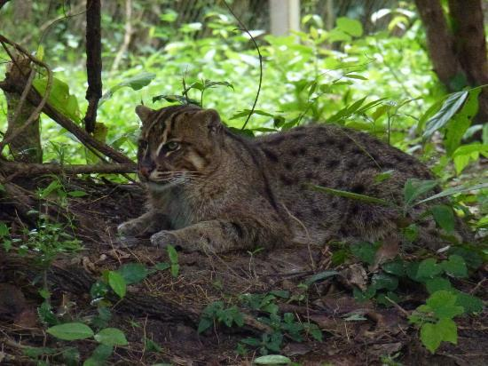 Bua - after 3 years in the sanctuary, still has daily ...