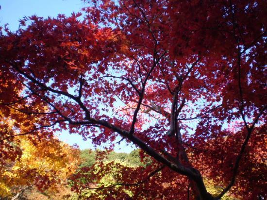 箕面の滝, 紅葉