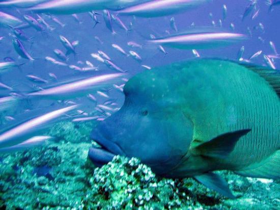 Kuredu Island Resort Diving