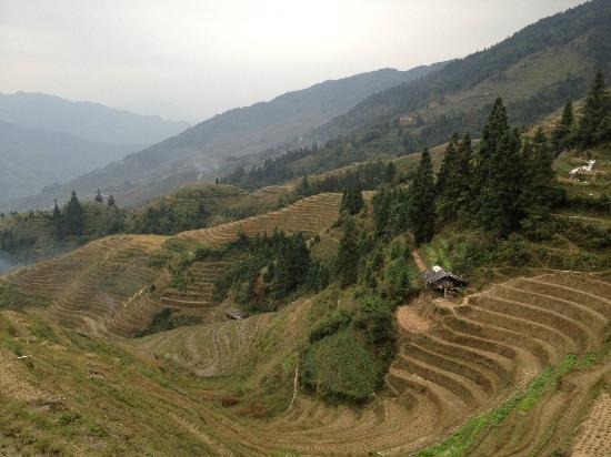 Li An Lodge: Rice terrace view from hotel