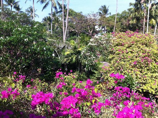 Garden Tour at Bali Hyatt: Mooi