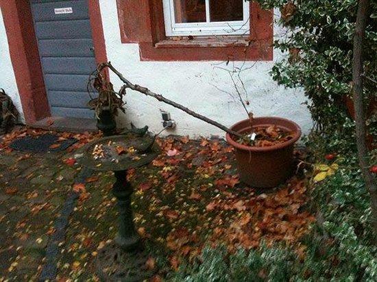 Schlosshotel Rothenbuch: Bepflanzung im Innenhof