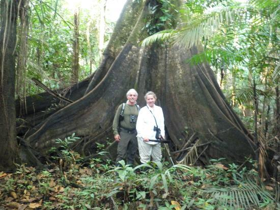 Amazonia Expeditions' Tahuayo Lodge: Big tree...