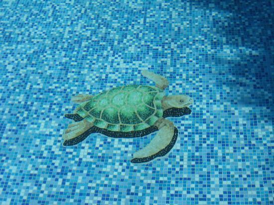 Tortuga en piedra venecita en el fondo de la piscina - Lucia la piedra piscina ...