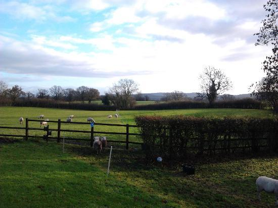 The Place To Stay : Views from the property including the household sheep
