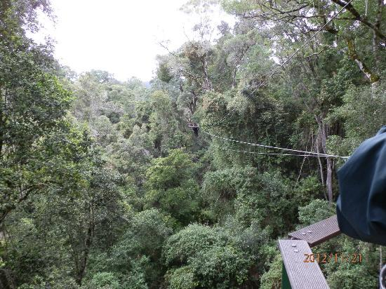 Tsitsikamma Canopy Tours: Looking at things from a different point of view