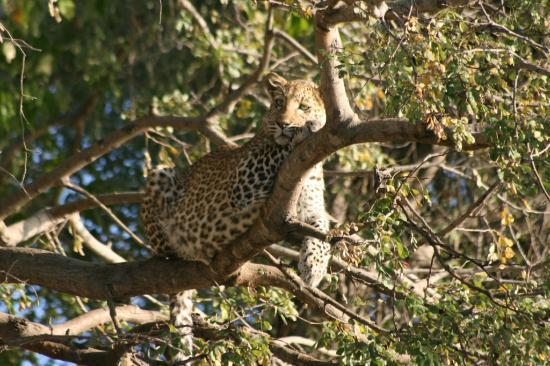 Cascade Island Lodge: Leopard on the Ntwala boat cruise
