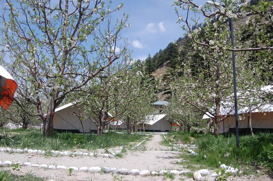 Apple orchard farm and camping , sangla valley,kinnaur,himachal pradesh,india.