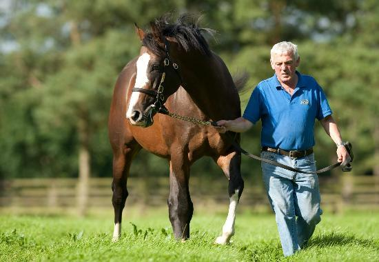 Irish National Stud: Irish National Stud (Tully, Ireland): Hours, Address, Top
