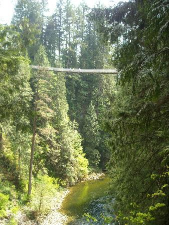 Capilano Suspension Köprüsü ve Parkı: The suspension bridge